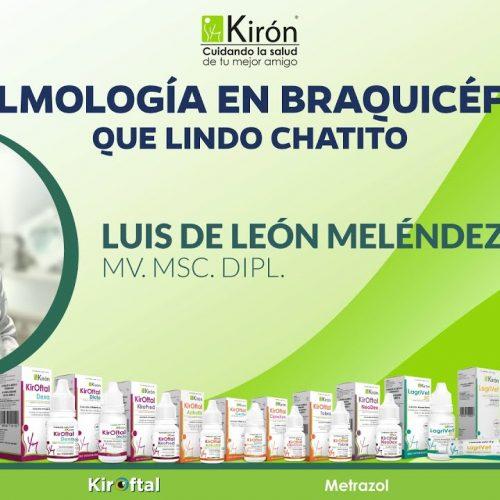 Oftalmología en Braquicéfalos, que Lindo Chatito